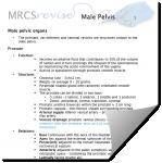 Screenshot-2018-3-5 Microsoft Word - Male pelvic organs docx - male-pelvic-organs pdf.png