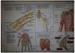 Screenshot-2018-3-18 21-Anatomy Illustrations 2 Matary EgyMD pdf.png