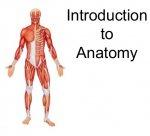 introduction-to-anatomy-2-638.jpg